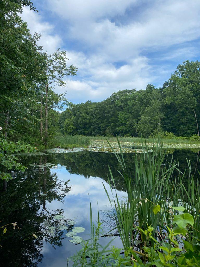 Swampy area at Muriel Hepner Park in Denville NJ - DenvilleGuide.com