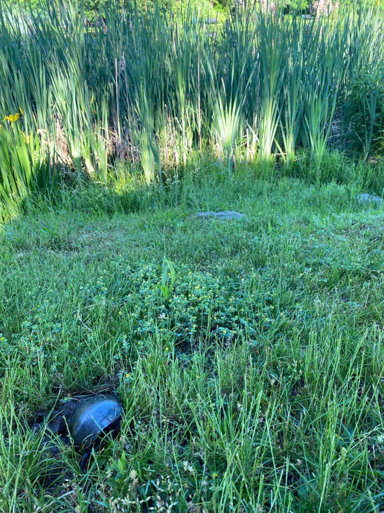 Spot the turtle at Muriel Hepner Park in Denville NJ - DenvilleGuide.com